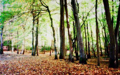 Autumn – the season of letting go